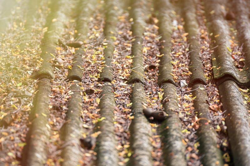 Seque as folhas nas telhas de telhado da casa imagens de stock