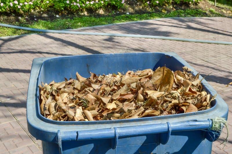 Seque as folhas no escaninho plástico imagens de stock