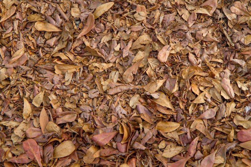 Seque as folhas para o fundo e texture fotos de stock