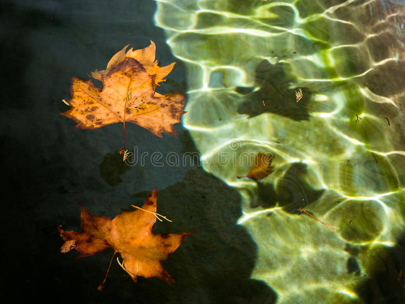 Seque as folhas sobre a água foto de stock