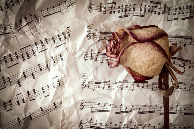 Seque Color De Rosa En Fondo De Las Hojas De Música Imagen de ...