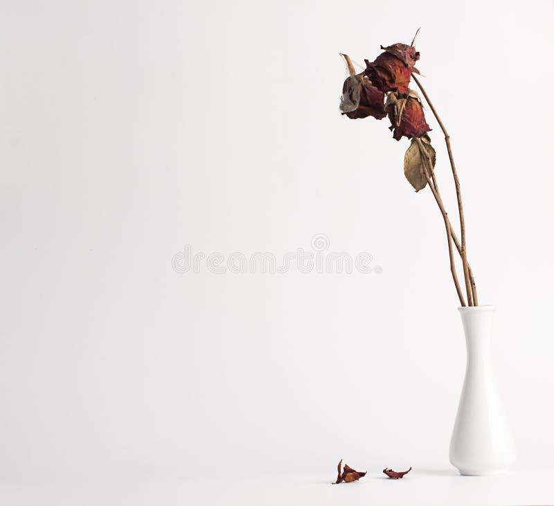 Seque color de rosa en un florero fotos de archivo