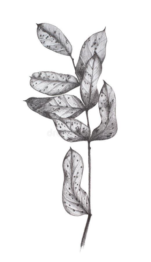 Seque la mano de las hojas dibujada libre illustration