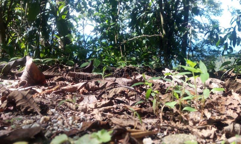 Seque las hojas de las colinas del darjeeling- imagen de archivo libre de regalías