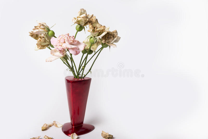Seque las rosas en florero rojo en el fondo blanco fotos de archivo libres de regalías