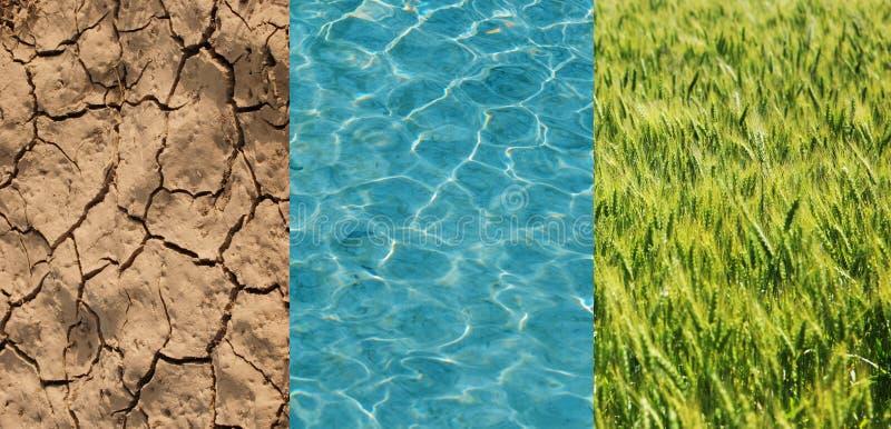 Seque o campo, o trigo verde e a água imagens de stock