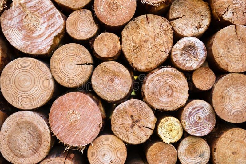 Seque os logs desbastados da lenha empilhados acima sobre se em uma pilha fotos de stock royalty free