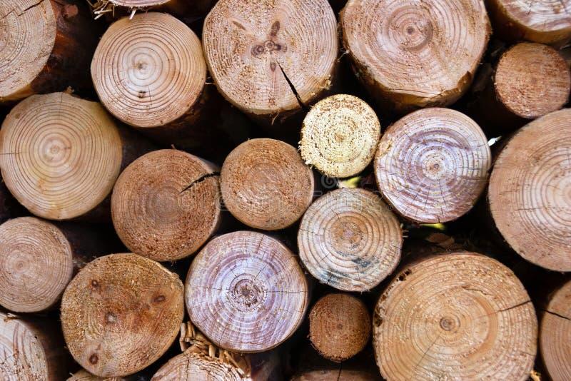 Seque os logs desbastados da lenha empilhados acima sobre se em uma pilha imagem de stock