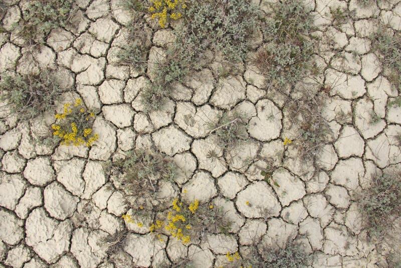 Seque terra rachada Teste padrão rachado da lama Solo na quebra imagens de stock royalty free