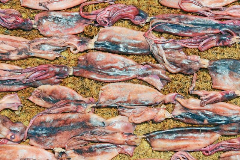 Sequedad del calamar en el sol fotografía de archivo libre de regalías