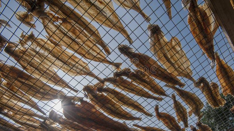 Sequedad secada de los pescados fotografía de archivo