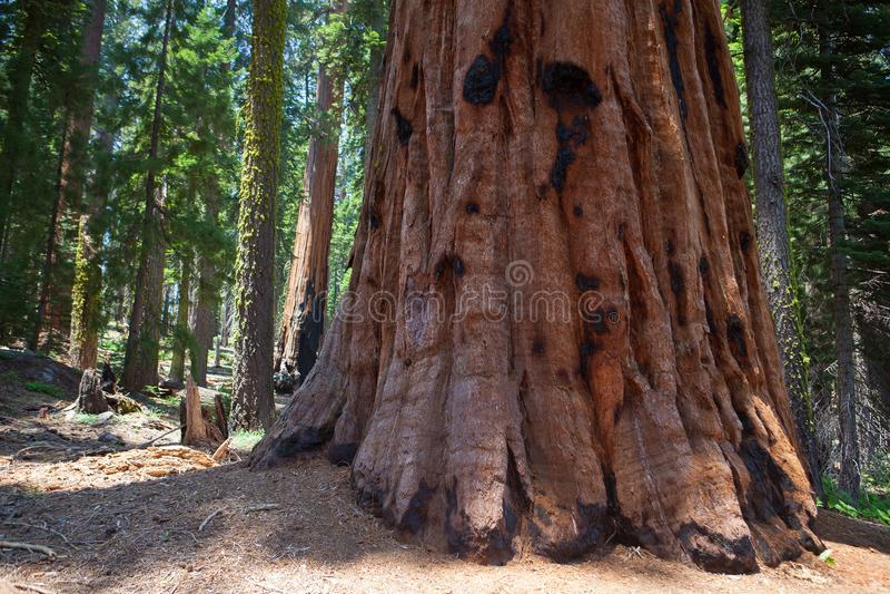 Sequoia εθνικό πάρκο, ΗΠΑ στοκ φωτογραφία