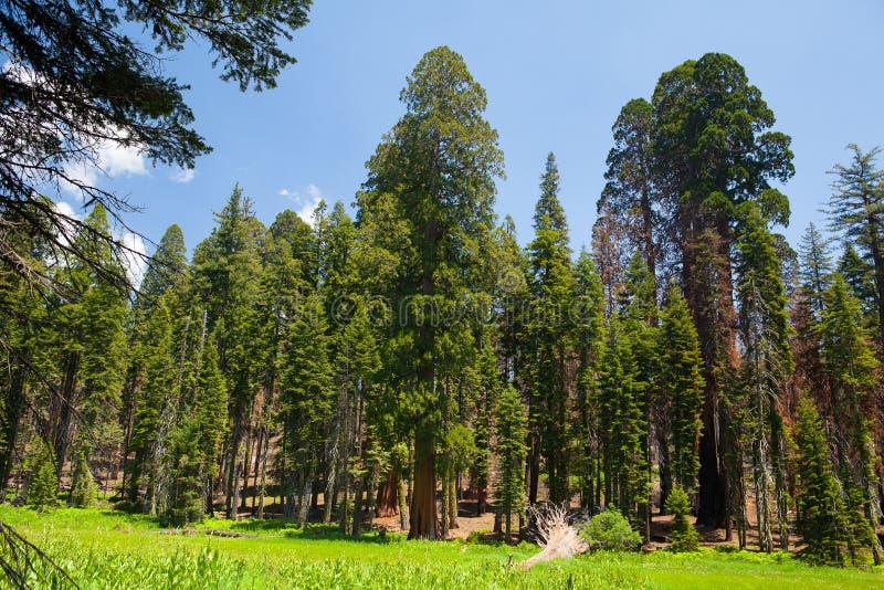 Sequoia εθνικό πάρκο, ΗΠΑ στοκ εικόνες