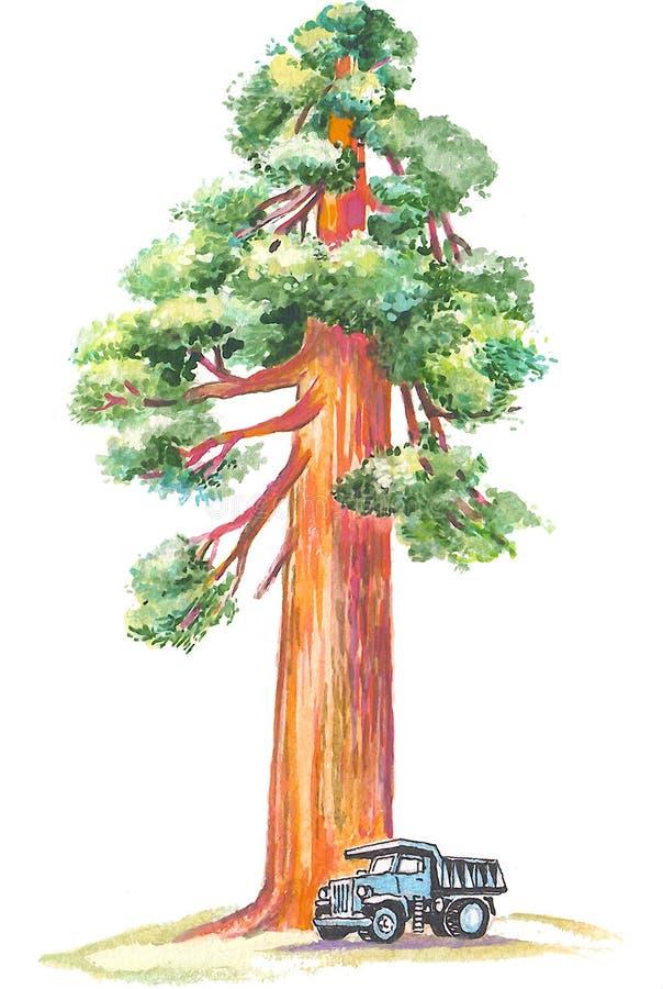 Sequoia ilustração royalty free