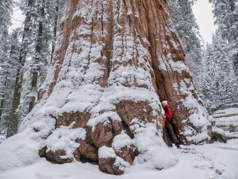 Sequoia Nationaal Park tijdens de winter, de V.S. royalty-vrije stock foto