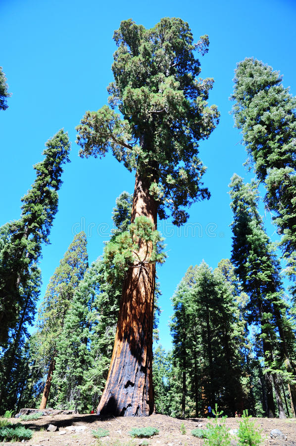 Download Sequoia National Park stock photo. Image of majestic - 26616490