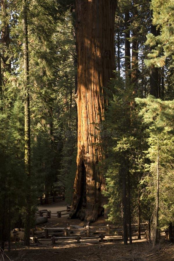 Sequoia National Park royalty free stock photo