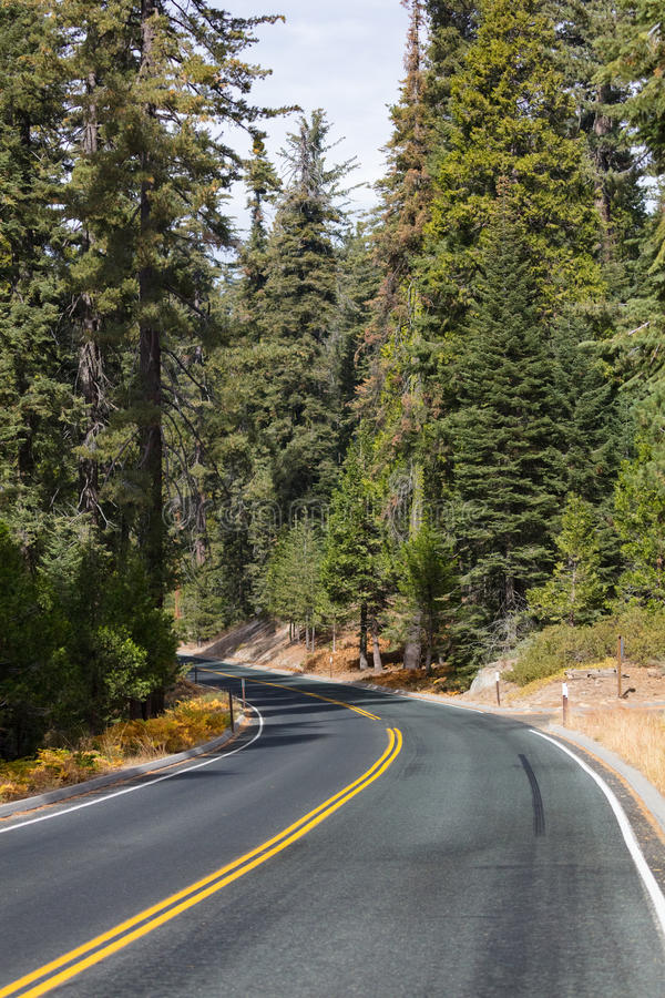 Sequoia National Park. Generals Hwy thru Sequoia National Park in California, USA royalty free stock images