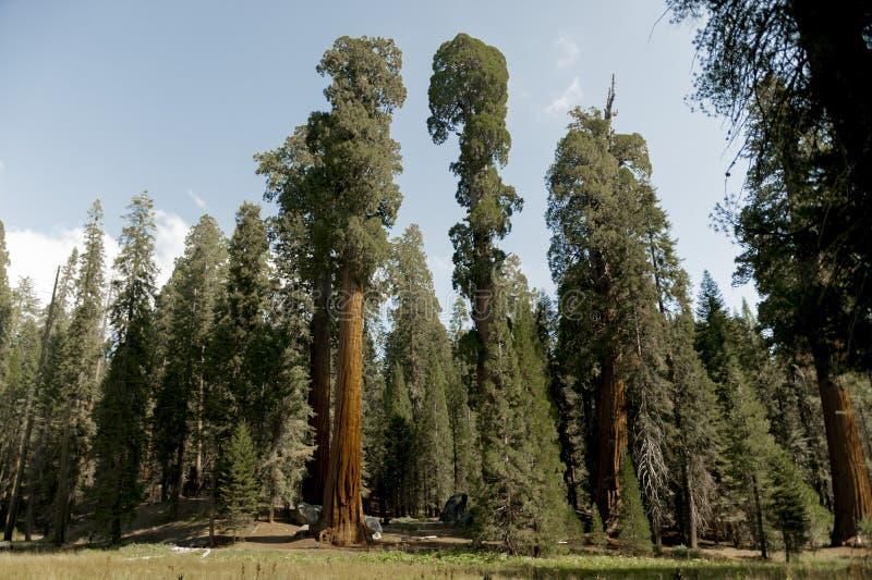 Sequoia Nationale Park royalty-vrije stock afbeeldingen