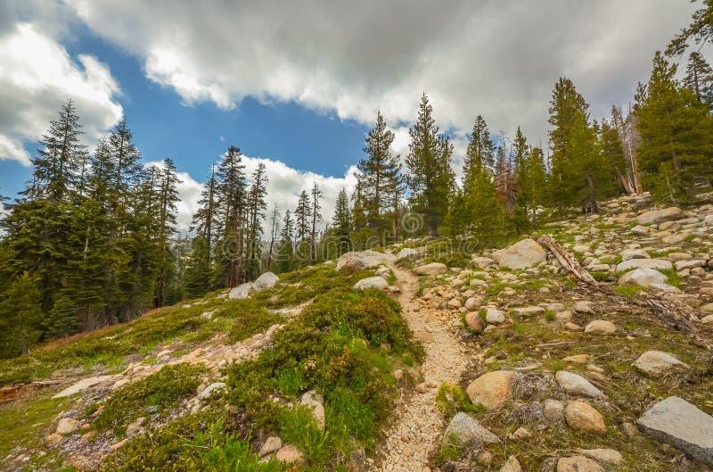 Sequoia Park fotografia de stock royalty free