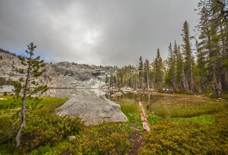 Sequoia Park imagens de stock