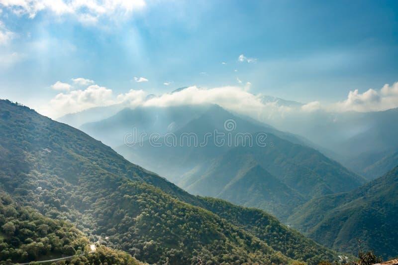 Sequoia Park foto de stock royalty free