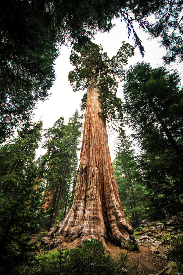 Sequoia Park fotografia de stock royalty free