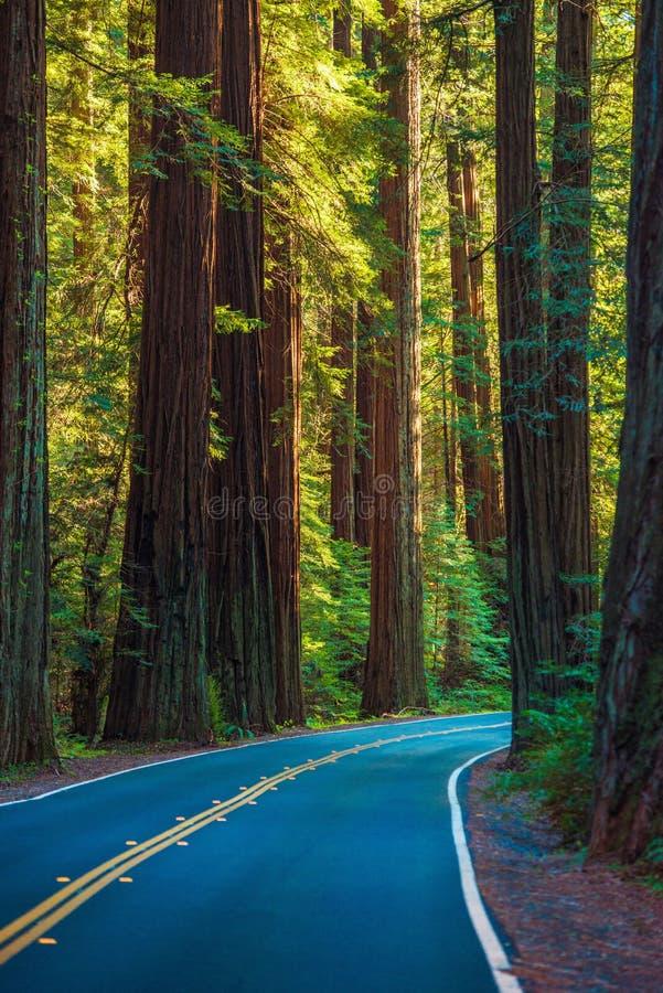 Sequoia vermelha Forest Highway foto de stock