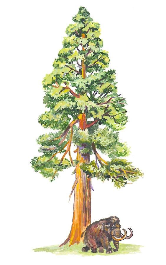 Sequoiadendron (árbol gigantesco) ilustración del vector