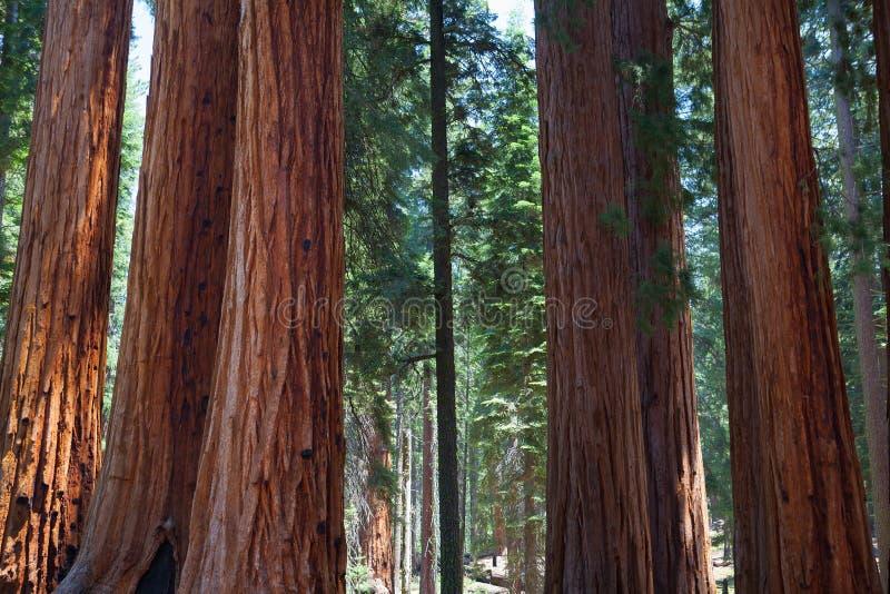 Sequoianationalpark, USA royaltyfri foto