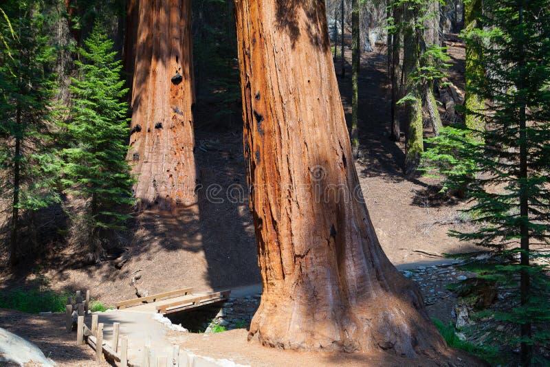 Sequoianationalpark, USA arkivbild