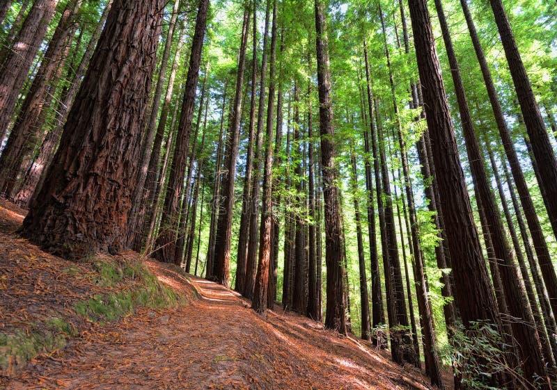 Sequoias Cabezon de Λα Sal, Ισπανία στοκ φωτογραφίες