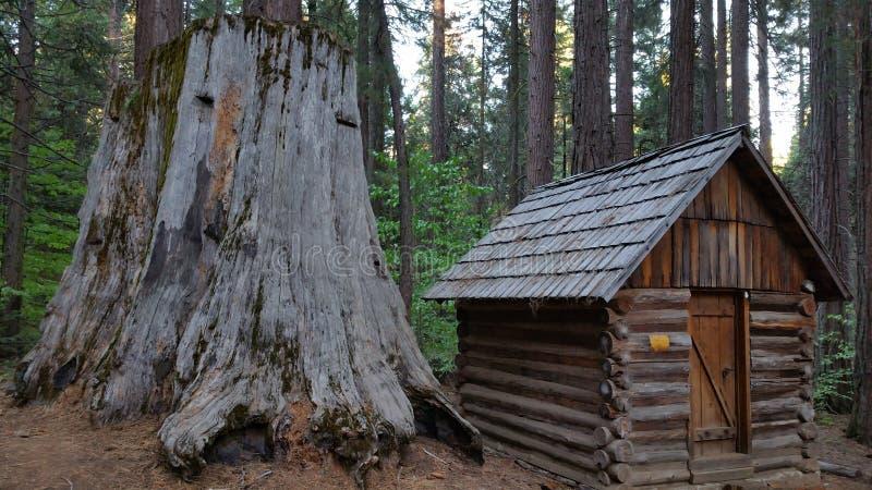 Sequoiastubbe med kabinen royaltyfria bilder