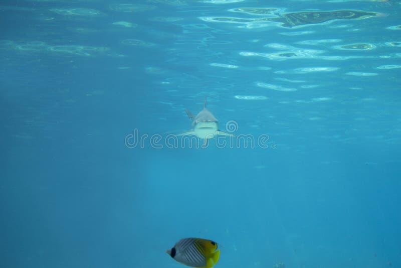 Ser cuidadoso o tubarão foto de stock