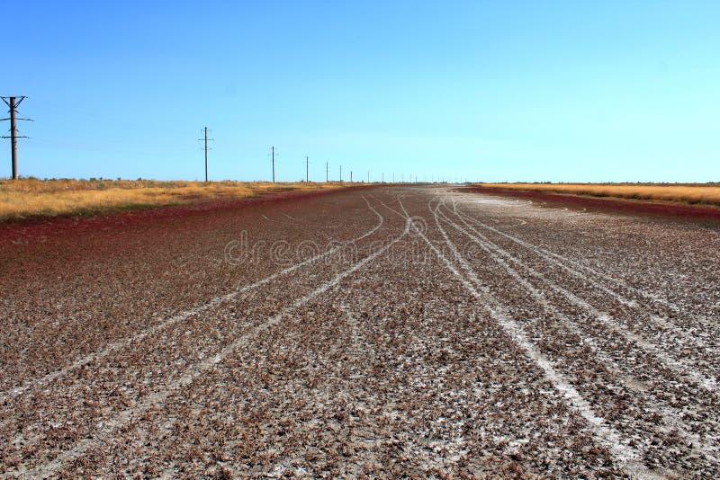 Ser det röda landskapet för sommar som vägen royaltyfri bild