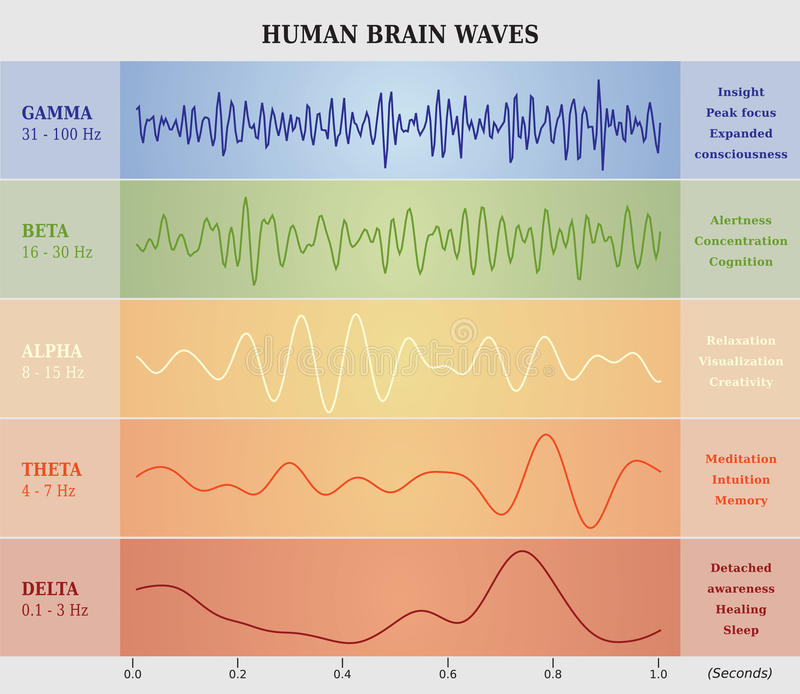 Ser humano Brain Waves Diagram/carta/ejemplo stock de ilustración