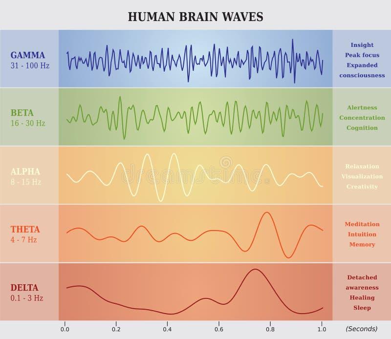Ser humano Brain Waves Diagram/carta/ilustração