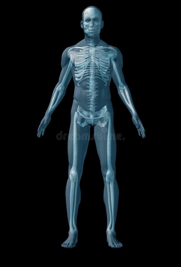 Ser humano de esqueleto no fundo preto ilustração stock