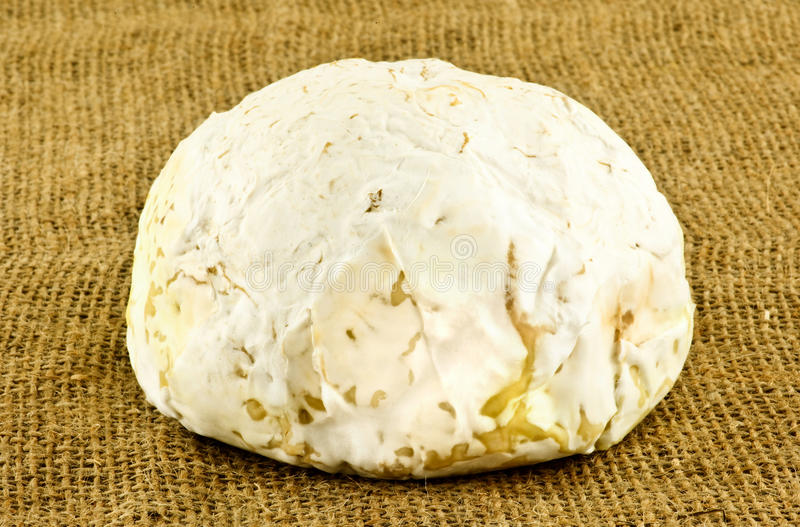 ser od Francja obrazy royalty free