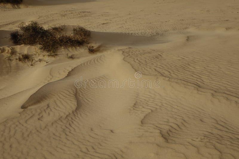 Sera del sole basso, con i modelli della sabbia e le strutture nel parco naturale, Corralejo, Fuerteventura, isole Canarie, Spagn fotografia stock