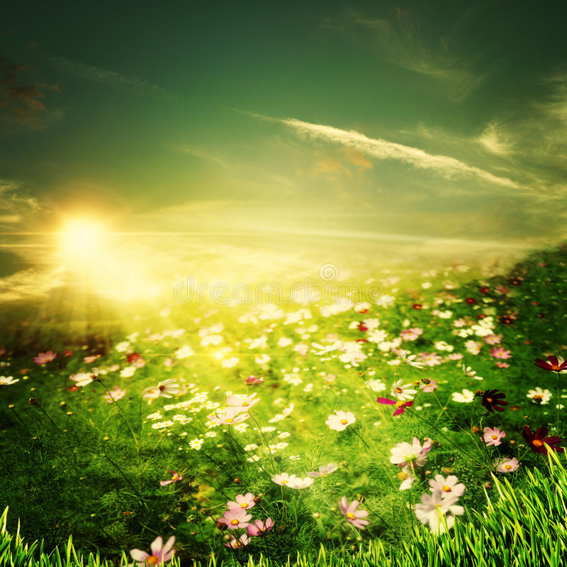 Sera di estate di bellezza sull'azienda agricola immagini stock libere da diritti