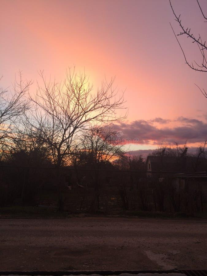 Sera fredda di autunno rosa fotografia stock libera da diritti