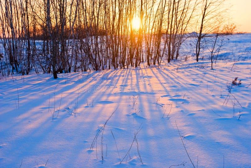 Sera in un boschetto di inverno fotografia stock