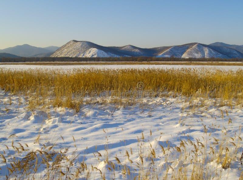 Sera in una valle di Ussuri del fiume, Russia di inverno immagini stock libere da diritti