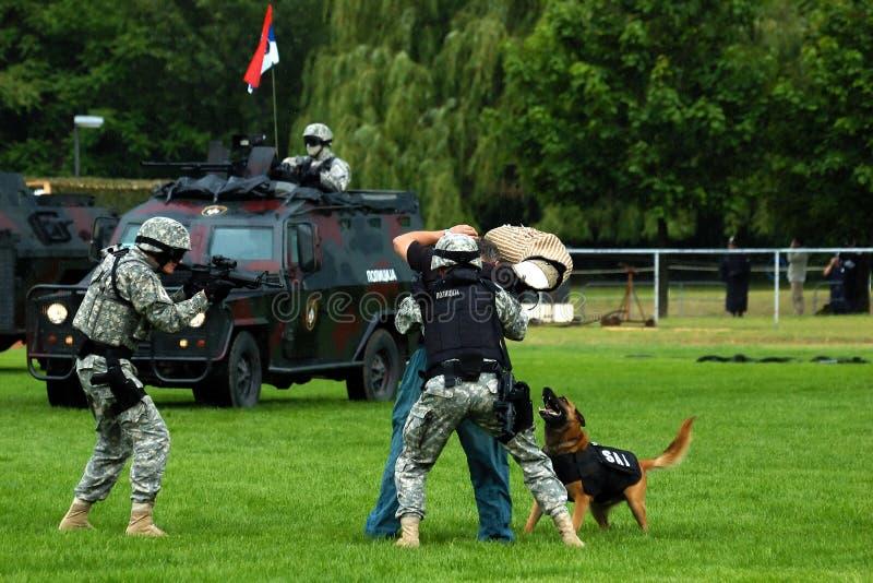 serbian полиций усилия действия стоковая фотография rf