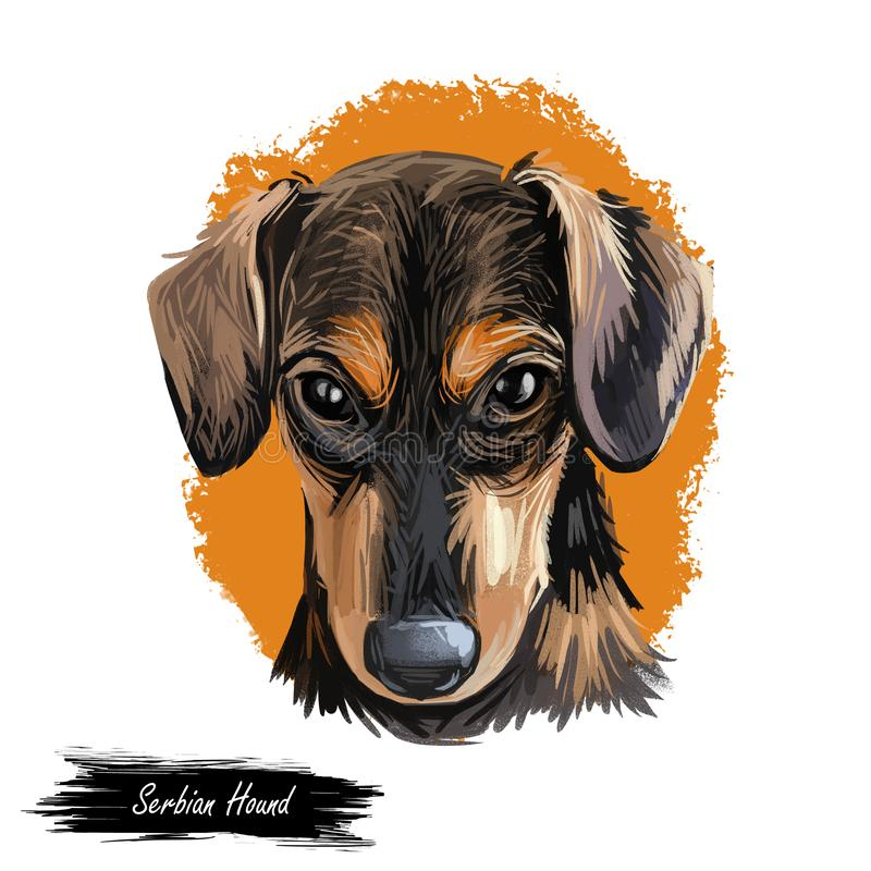 Serbian Hound pet digital art, watercolor hand drawn poritair of canine. Domestic animal from Serbia and Montenegro. Balkan puppy with long ears and smooth fur royalty free illustration