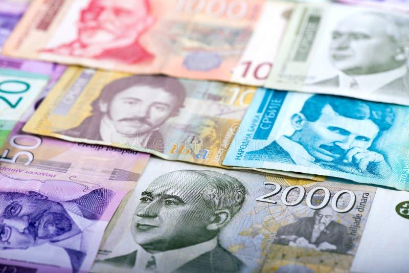 Serbisk dinar - sedlar royaltyfri foto