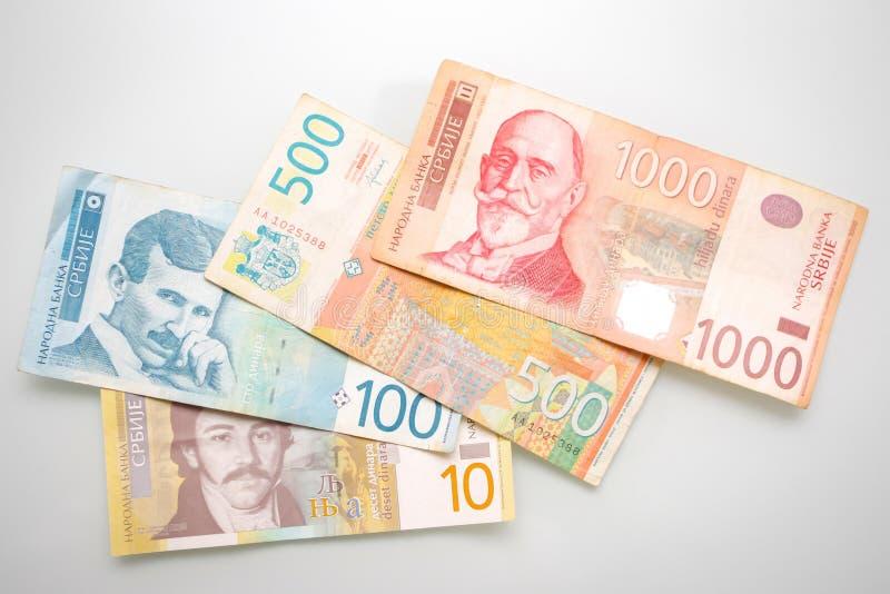 Serbiska dinar som visas på vit bakgrund royaltyfri foto