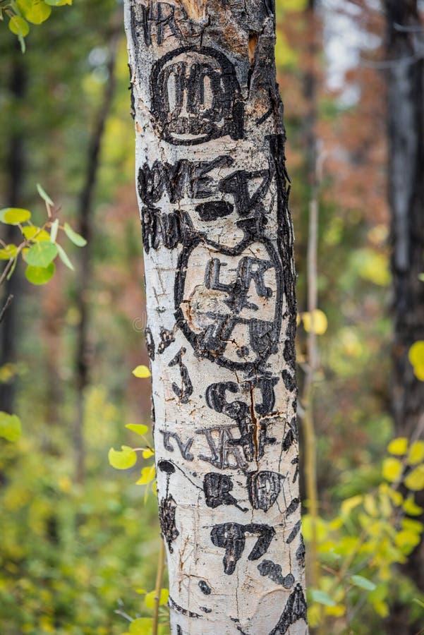Serca i inicjały rzeźbili w barkentynę osikowy drzewo w Kolorado zdjęcia royalty free