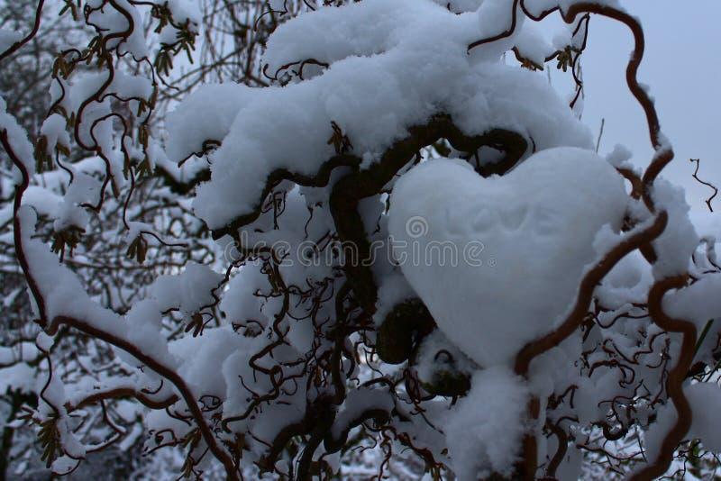 Serce śnieg w wierzbie zdjęcia royalty free